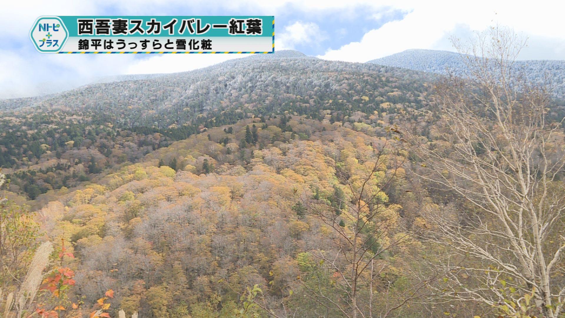 「西吾妻スカイバレー紅葉」錦平はうっすらと雪化粧